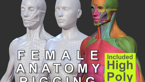Character - Female Anatomy Skin Ecorche