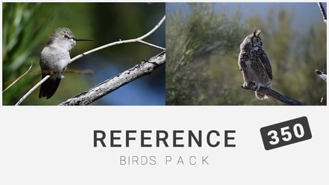 Reference: Birds Pack 350