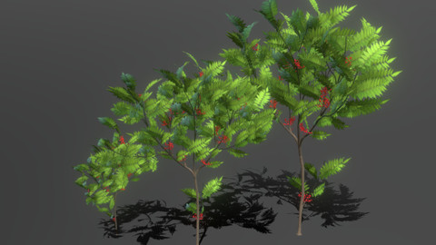 Tiny Rowan Tree