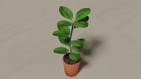 PLANT FOR HOME DECORATION