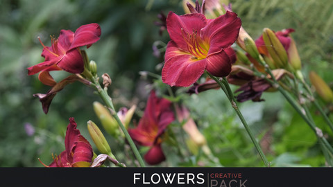 Flowers CREATIVE PACK
