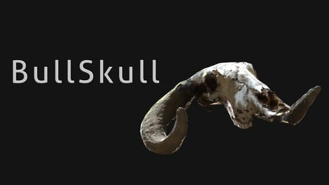 Bull_Skull