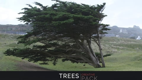 Trees CREATIVE PACK