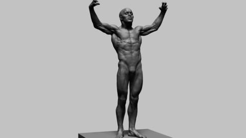 Human Anatomy v2