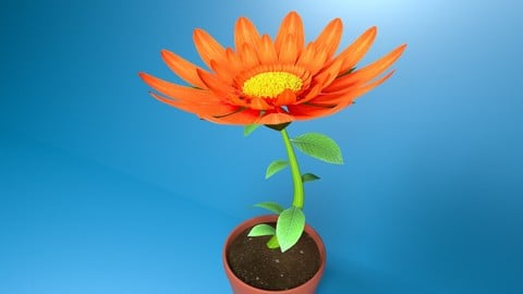 Orange Flower Animated