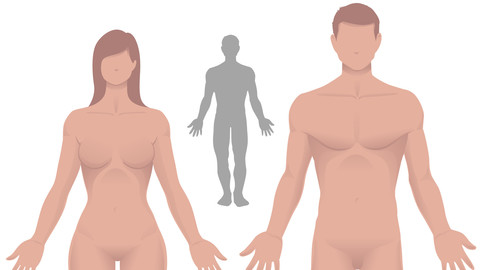 Male and Female Vector Simple Anatomy
