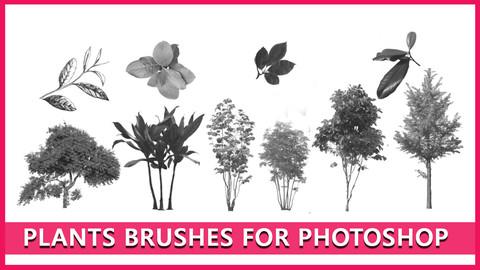 17 plants brush for photoshop