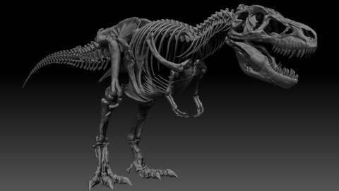 Sub Tyrannosaurus Rex Full Skeletons - SubRex Sculpt Project