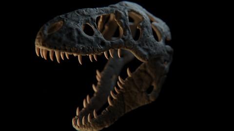T-Rex skull model