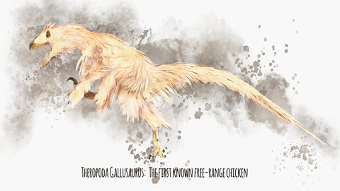 Theropoda Gallusaurus: The First Known Free-Range Chicken