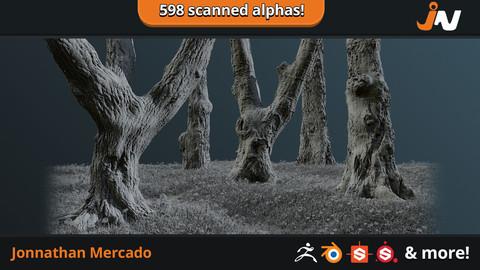 JM - Treebark Photogrammetry Alpha Set