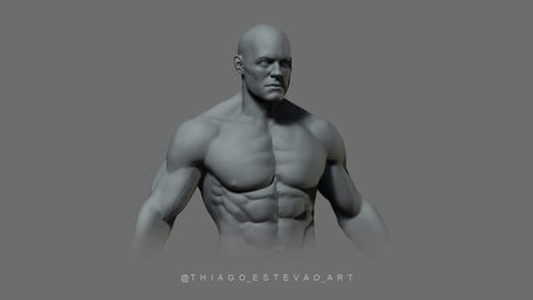 Male Anatomy Model.