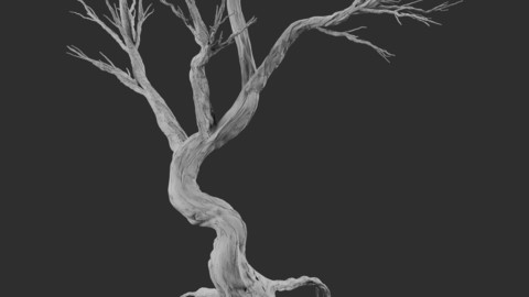 5 Model Game Tree