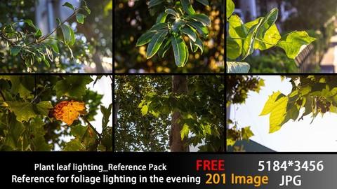 Plant leaf lighting_Reference Pack【FREE】