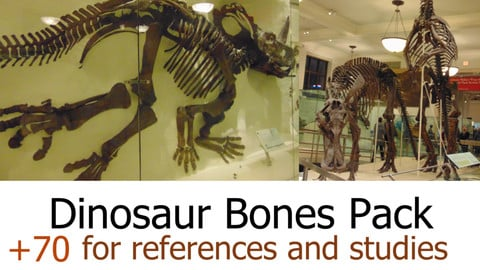 +70 Dinosaur Bones Pack  For References and Studies