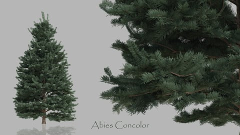 Conifer Trees Pack