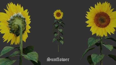 Flowers Pack