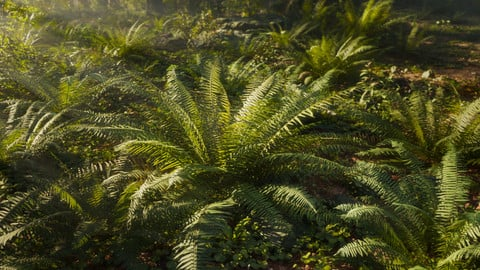 3D Ferns Collection