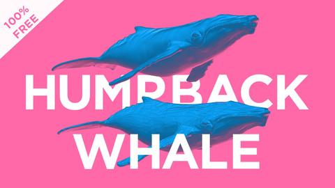 Humpback Whale Base