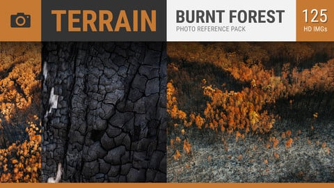 Burnt Forest Photo Reference Pack