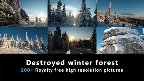 Destroyed Winter Forest