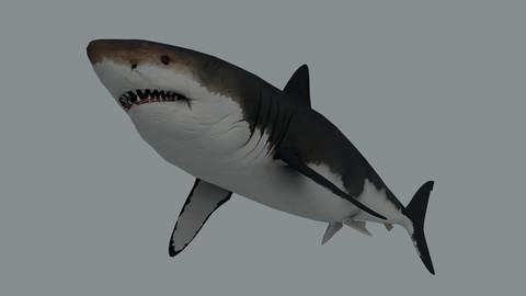 Megalodon (Shark)