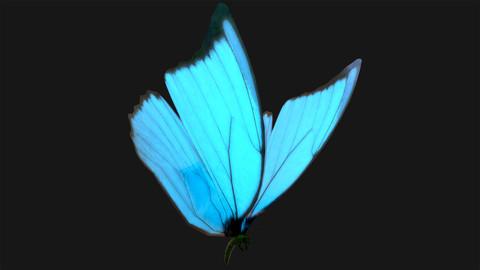 Butterfly - 03