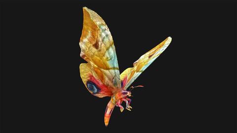 Butterfly - 05