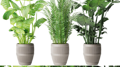 Collection plant vol 4