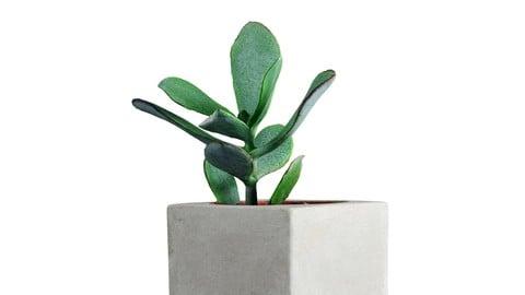 Concrete Pot + Succulent - 3D Scanned Model