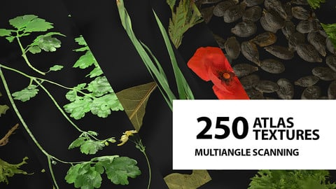 Huge atlas pack (250) | Foliage | Spice | Decals