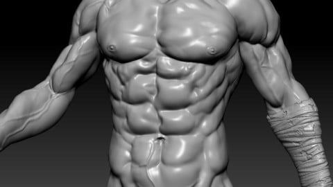 zbrush Trunk muscles