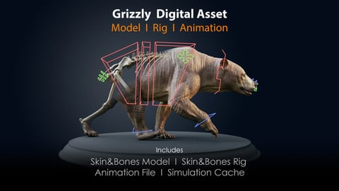 Grizzly Asset I Skin & Bones - Rig - Animation File - Simulation Cache