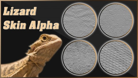 Lizard Scale And Skin Alpha