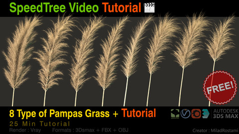 8 Type of Pampass grass + Tutorial