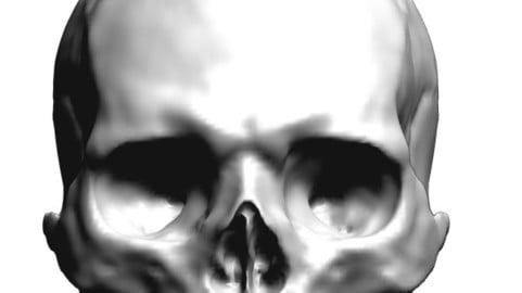 Skull head right