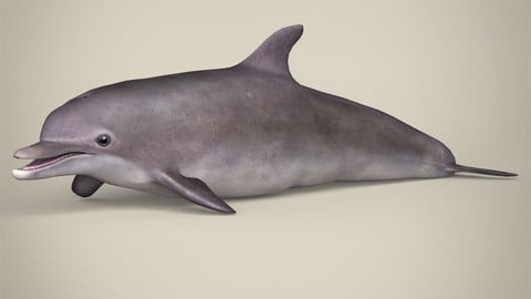 Low Poly Dolphin 3D Model
