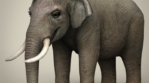 Low Poly Elephant 3D Model