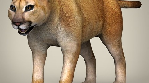 Low Poly Mountain Lion 3D Model