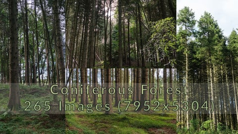 Coniferous Forest Photopack - 265 Images