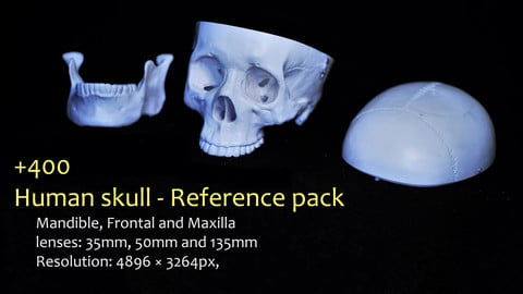 Human skull - Reference pack