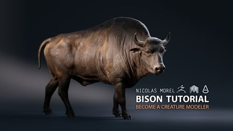 Bison Modeling Tutorial
