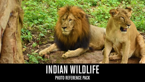 Indian Wildlife - Photo Reference Pack