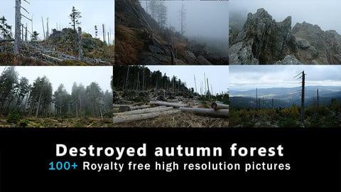 Destroyed autumn forest