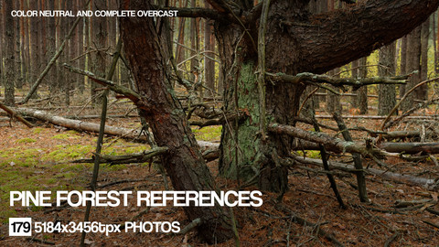 Pine Forest reference pack