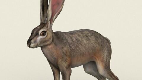 Rabbit Low Poly PBR Ready 3D Model