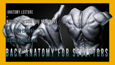 Back Anatomy for Sculptors
