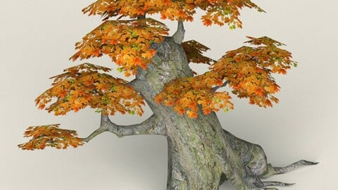 Low Poly Maple Tree 02