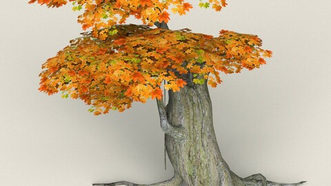 Low Poly Maple Tree 04