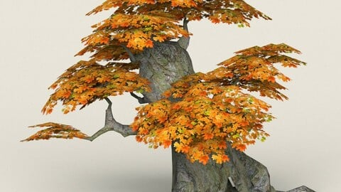 Low Poly Maple Tree 05